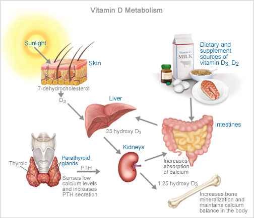 synthesise vitamin Vitamin d and sunlight your body can synthesise over 20,000 iu of vitamin d per day, provided you are not deficient in magnesium.